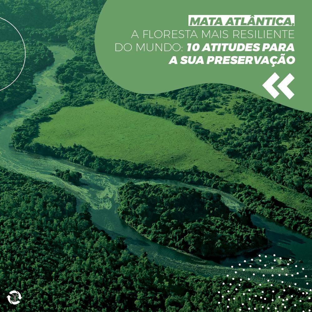 Mata Atlântica, a floresta mais resiliente do mundo: 10 atitudes para a sua preservação