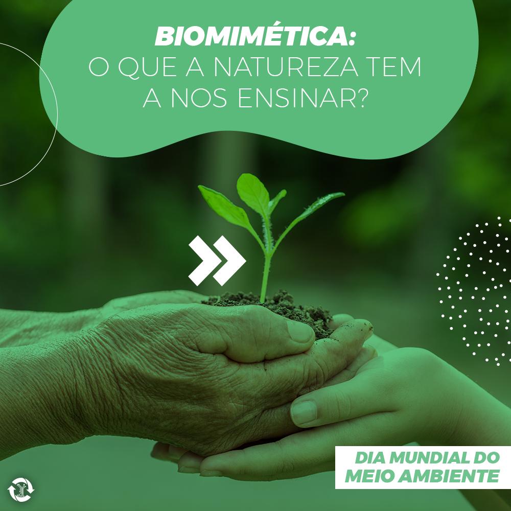 Biomimética: o que a natureza tem a nos ensinar?